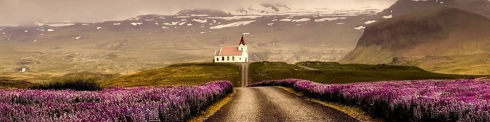 Fields of flowers Iceland