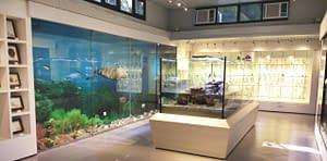 Eco Museum indoor displays