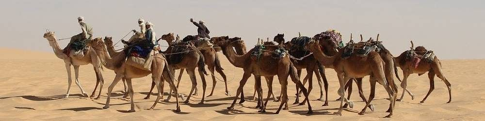 Camels in the Sahara Desert in Chad