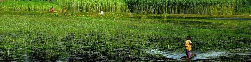 Green lake in Bangladesh